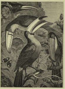 penny mag toucan pic